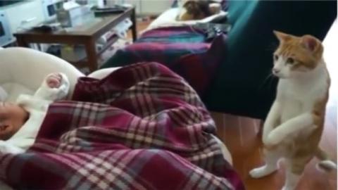 Diese Katze sorgt sich, als das Baby niest. Ihre Reaktion ist einmalig!