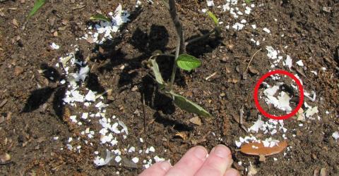 Garten: Eierschalen gegen Schnecken und Nacktschnecken