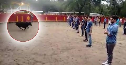 Diese Studenten setzen sich gemeinsam der Gefahr eines Stieres in der Arena aus, um eine Sache zu beweisen (Video)