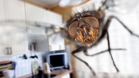 Er gibt etwas davon in den Beutel und hängt ihn auf. Seitdem hat er keine Fliegen mehr im Garten!