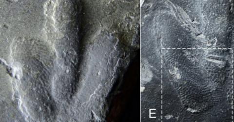Neu entdeckte Dinosaurier-Fußabdrücke verraten, wie ihre Haut wirklich aussah