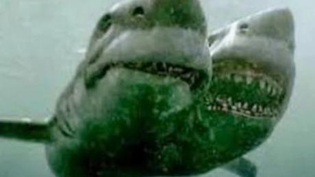 Furchteinflößende Entdeckung: Forscher finden zweiköpfigen Hai im Mittelmeer