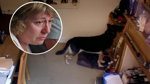 Sie filmen heimlich ihren Hund und kämpfen mit den Tränen