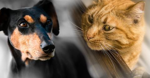 Hund vs. Katze: Die Wissenschaft hat herausgefunden, welches Haustier schlauer ist