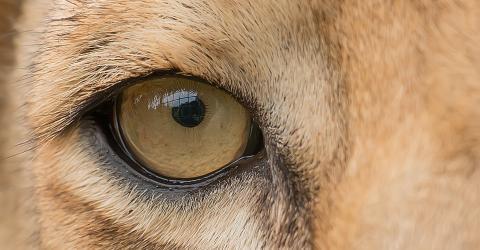 Ein Tier, sieben Mal größer und wilder als ein Löwe, versetzt alle ins Staunen