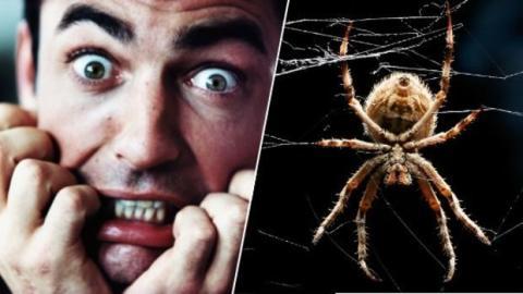 Angst vor Spinnen ist nie wieder notwendig mit dieser Methode!