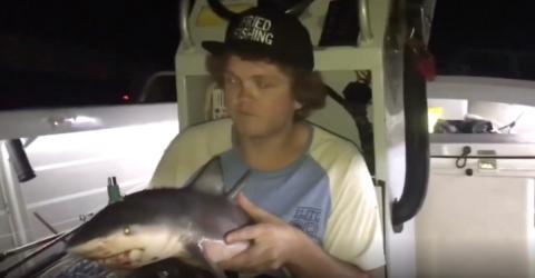 Er steckt eine Bong in den Baby-Hai - seine nächste Aktion macht rasend (Video)