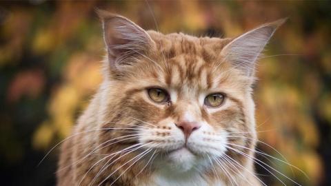 Besitzerin der größten Katze der Welt erschreckt mit diesem gemeinsamen Foto