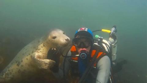 Beim Tauchen mit Seelöwen hält die Unterwasserkamera eine berührende Begegnung fest (Video)
