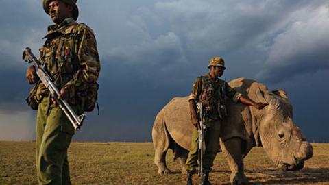 Diese Strafe soll jetzt Wilderern von Nashörnern gehörig Angst machen!