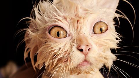 2 Millionen Katzen sollen in Australien mit elendiger Methode getötet werden