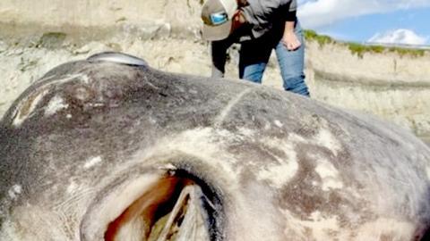 Er entdeckt eine seltsame Meereskreatur, die nicht mal die Wissenschaftler identifizieren können