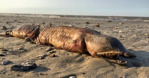 Sie entdecken diese augenlose Kreatur am Strand. Dann mischen sich Twitter-User ein