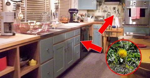 l wenzahn im garten diese werkzeuge aus der k che helfen. Black Bedroom Furniture Sets. Home Design Ideas