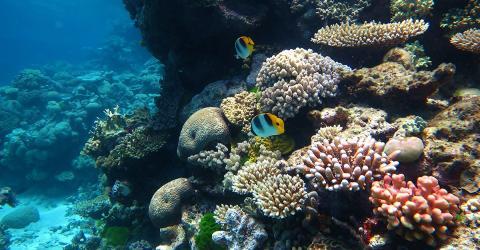Great Barrier Reef: Ein indischer Konzern zerstört das Paradies für 30 Milliarden Dollar