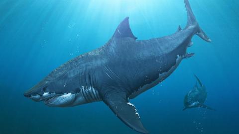 Forscher finden heraus, warum der größte Hai aller Zeiten ausgestorben ist