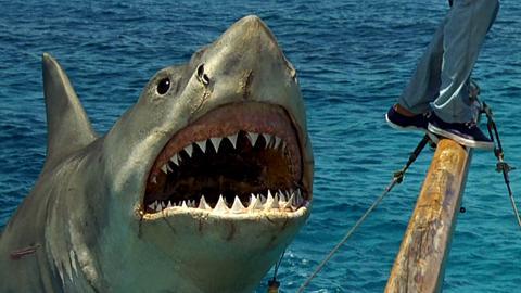 """Der """"Weiße Hai"""" von Steven Spielberg hilft bei der Aufklärung eines seit 44 Jahren ungelösten Mordfalls"""