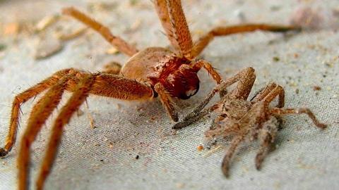 Das sind die 5 giftigsten Spinnen der Welt