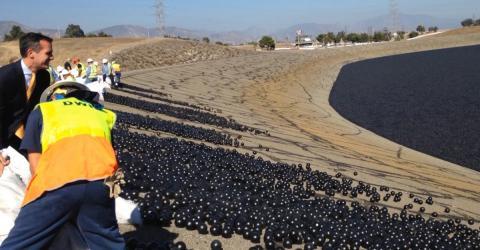 See im Hitzesommer: Bälle gegen Dürre erweisen sich als großer Fehler