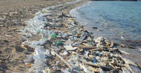 Bakterien können uns vom Plastikmüll in den Ozeanen befreien