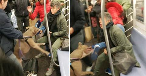 Pitbull sorgt für einen Alptraum in der U-Bahn