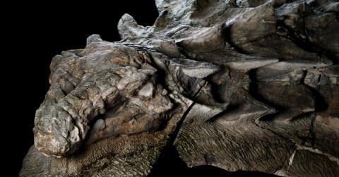 Sie entdecken einen Dinosaurier, der 110 Millionen Jahre alt ist. Er ist in einem extrem guten Zustand!