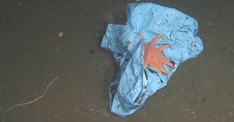 Marianengraben: Forscher machen traurige Entdeckung im Ozean