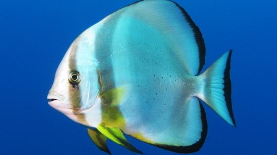 Diese Fische singen!