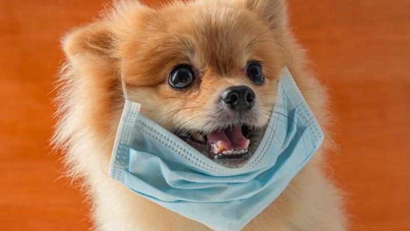 """Coronavirus: Hund mit """"schwachen Werten"""" positiv auf COVID-19 getestet"""