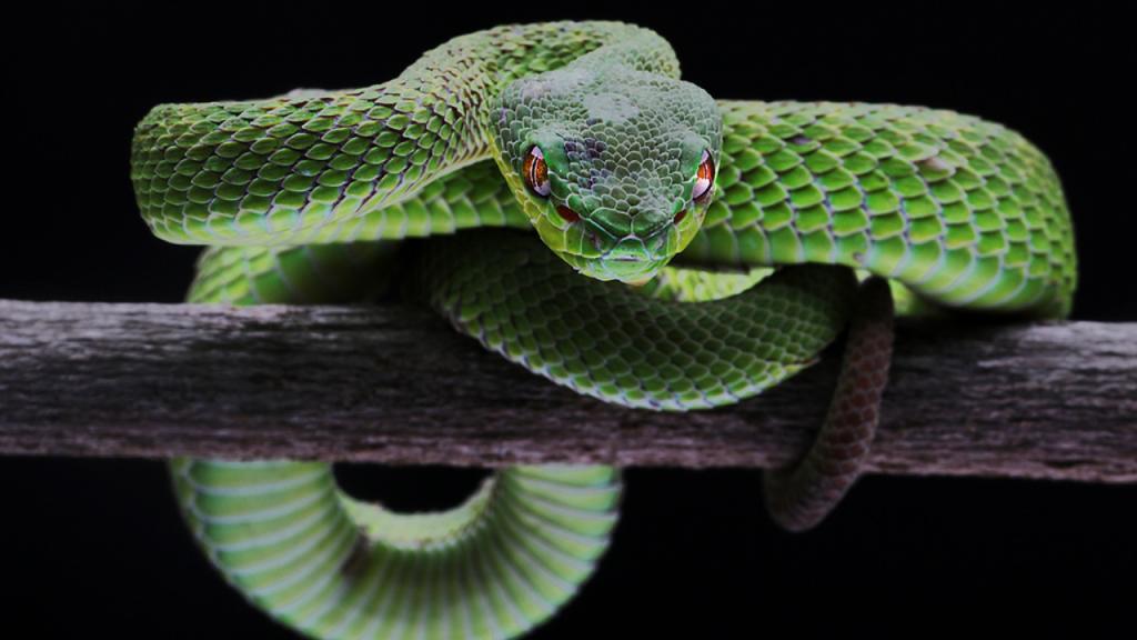 Ranking: Das sind die 15 für den Menschen gefährlichsten Tiere der Welt