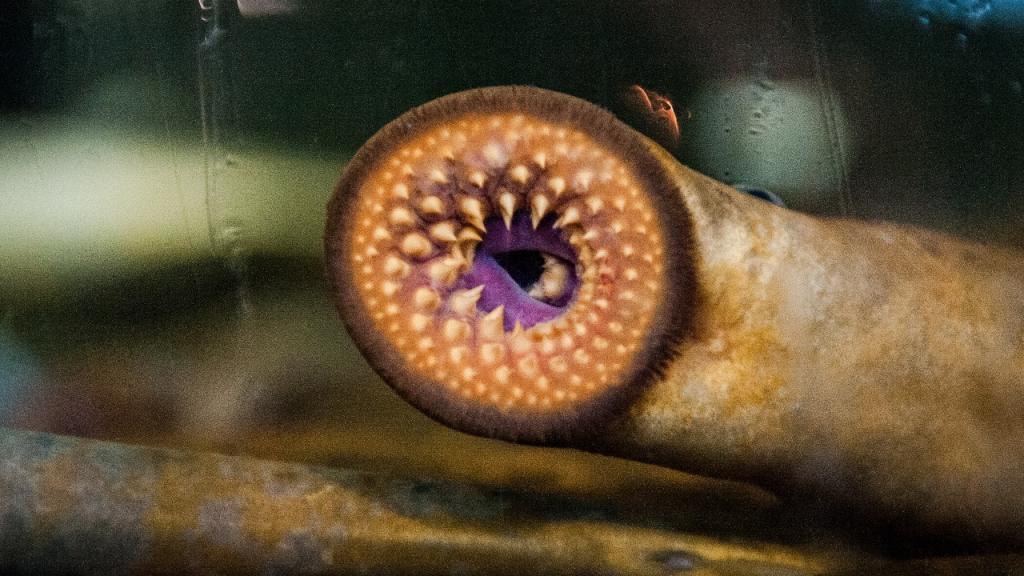 Diese Horror-Tiefseekreaturen sind konserviert für die Ewigkeit