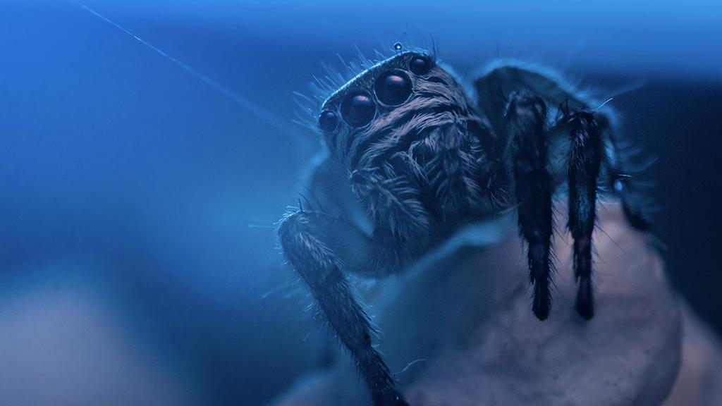 Spinnen Nachts Essen