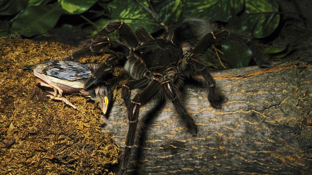 Größter Wurm Der Welt