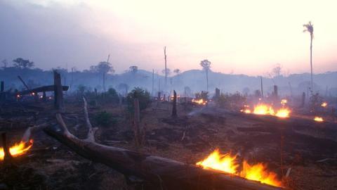 Amazonas: Die grüne Lunge der Erde steht in Flammen