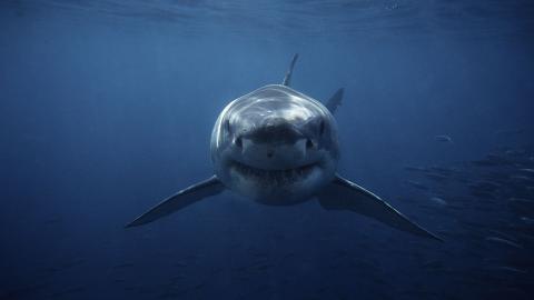 20.000 Meilen unter dem Meer: U-boot filmt mysteriösen Tiefsee-Hai dank eines Trackers