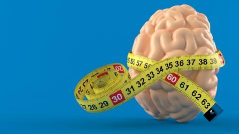 Wie die Größe unseres Gehirns unseren IQ beeinflusst