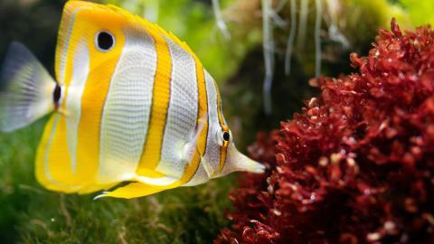 Taucher-Paradies Tubbataha-Riff: Mit Haien durch ein buntes Korallenmeer schwimmen
