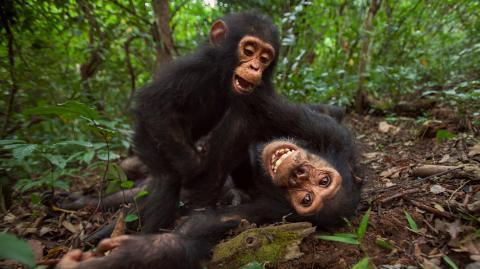 Von Affen bis Ratten: Warum Forscher plötzlich Tiere kitzeln