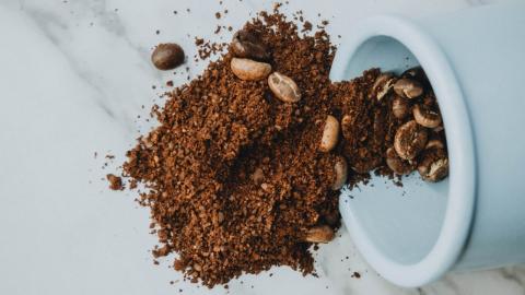 Keine sauberen Kaffeebohnen: Dieses Insekt gelangt bei der Produktion in den Kaffee!