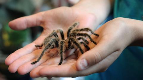 Studie findet perfekte Methode, wie ihr eure Angst vor Spinnen loswerdet