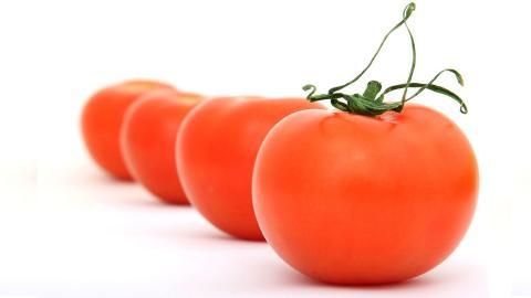 Richtige Lagerung: Gehören Tomaten in den Kühlschrank oder nicht?