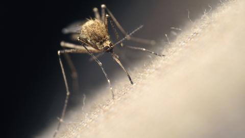 Warum wir dankbar über Mücken sein sollten