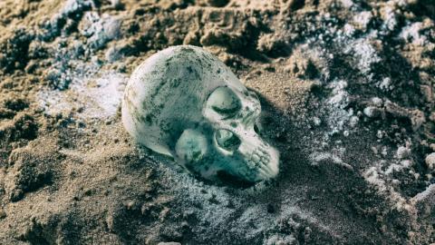 Versteinertes Gehirn entdeckt: Archäologischer Fund ist 310 Millionen Jahre alt!