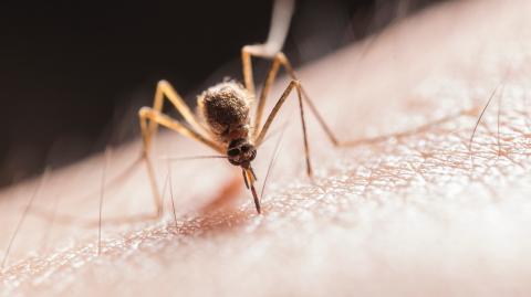 Neue Studie macht Mücken blind für den Menschen