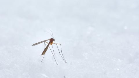 Diese Leute werden von Mücken gestochen: Die Vorlieben der Quälgeister
