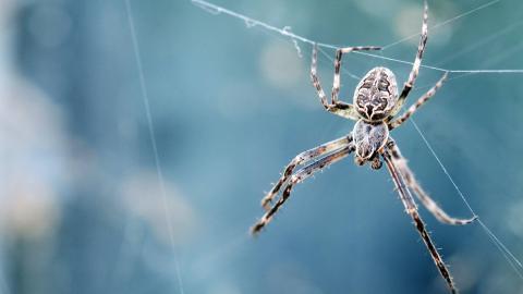 Achtung, Spinne: Darum belagern sie ab September unsere Wohnungen