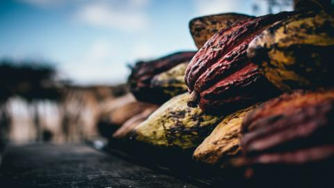 TikTok: Schokoladenfans angeekelt, als sie entdecken, wie Kakaofrucht wirklich aussieht