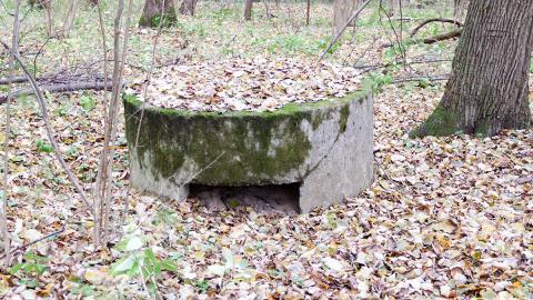 Mitten im Wald: Jugendliche entdecken einen unterirdischen Bunker, dann erkennen sie die Wahrheit