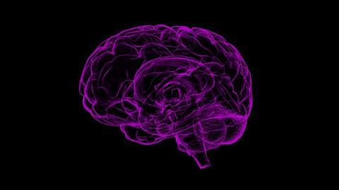 In Mini-Gehirnen aus dem Labor überrascht elektrische Aktivität: Die Folgen für uns Menschen sind enorm
