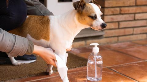 Coronavirus: Können Hunde die Krankheit riechen?